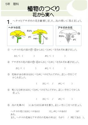 植物のつくり 花から実へ