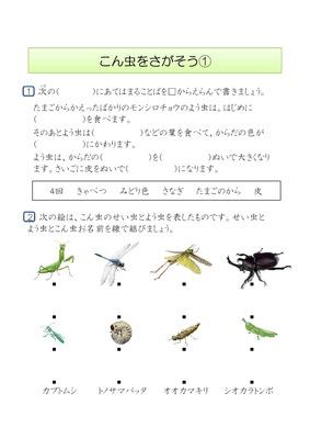 昆虫を探そう①
